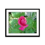 Beautiful Rose Photo Framed Panel Print
