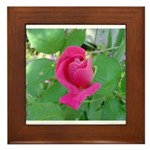 Beautiful Rose Photo Framed Tile