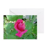 Beautiful Rose Photo Greeting Cards (Pk of 10)