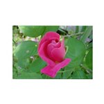 Beautiful Rose Photo Rectangle Magnet