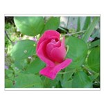Beautiful Rose Photo Small Poster