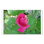 Beautiful Rose Photo Rectangle Sticker