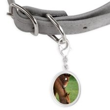 American Quarter horse mare and Small Oval Pet Tag