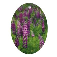 Lupin (Lupinus sp.) patch (focus o Ornament (Oval)