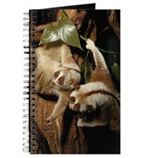 Slow loris (Nycticebus coucang) Journal