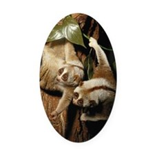 Slow loris (Nycticebus coucang) Oval Car Magnet