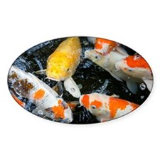 Koi fish, close-up, overhead view Decal