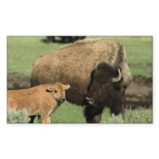 Female Bison with calf (Bison  Decal