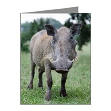 African warthog Note Cards (Pk of 20)