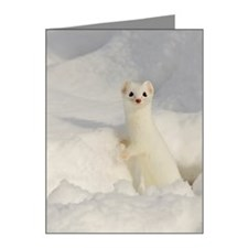 Ermine Note Cards (Pk of 20)
