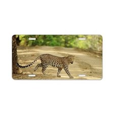 Indian leopard at Kanha Tig Aluminum License Plate