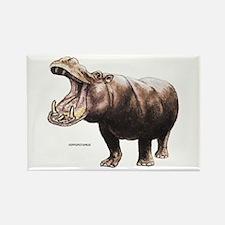 Hippopotamus Animal Rectangle Magnet