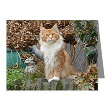 Maine Coon Cat Note Cards (Pk of 10)