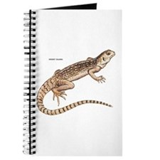 Desert Iguana Journal
