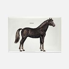 Morgan Horse Rectangle Magnet