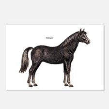 Morgan Horse Postcards (Package of 8)
