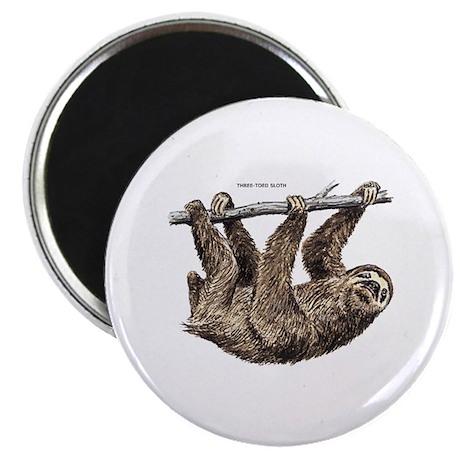 Three-Toed Sloth Magnet