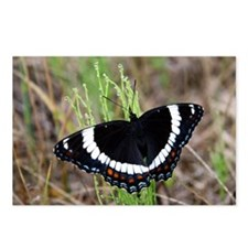 White Admiral Postcards (Package of 8)