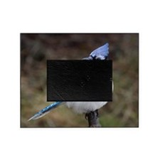 Blue Jay Picture Frame