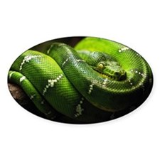 Green snake on tree Decal