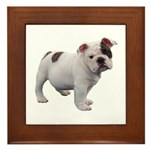 Bulldog puppy Framed Tile