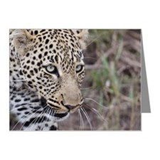 Portrait of leopard Note Cards (Pk of 10)
