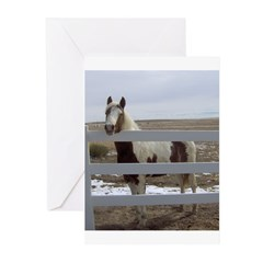 Paints and Pintos Greeting Cards (Pk of 10)