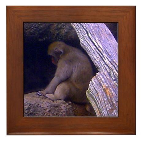 japanese macaque Framed Tile