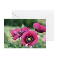 Monets Poppies Greeting Card
