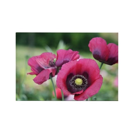 Monets Poppies Rectangle Magnet
