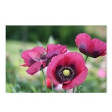 Monets Poppies Postcards (Package of 8)