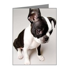Guilty Boston Terrier Note Cards (Pk of 10)