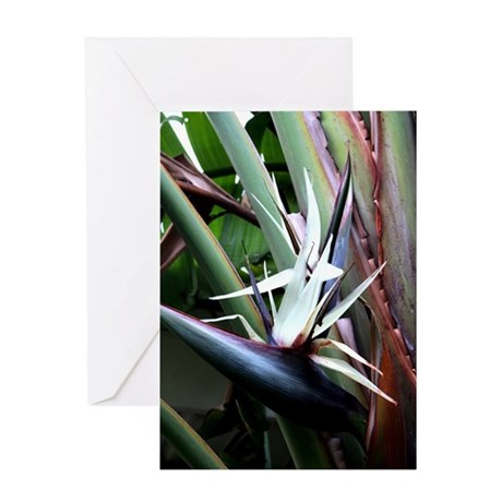 White Bird of Paradise Greeting Card