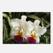White Orchids Postcards (Package of 8)