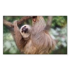 Three-toed sloth hanging in a  Decal
