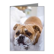 Dog in snow Note Cards (Pk of 10)