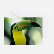 TOUCAN Greeting Cards (Pk of 10)
