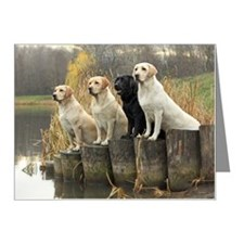 Labrador Retrievers in field Note Cards (Pk of 20)