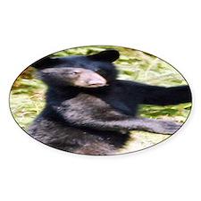 black bear cub Oval Decal