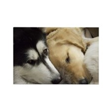 Puppy dog heads sleeping together Rectangle Magnet