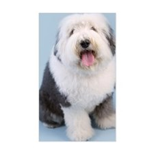 Portrait of old English Sheepd Decal
