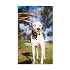 Dalmatian dog standing squinti Decal