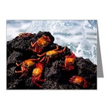 Red crabs are found on most  Note Cards (Pk of 20)