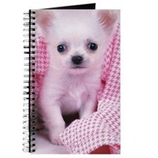 Chihuahua: is the smallest breed of dog an Journal