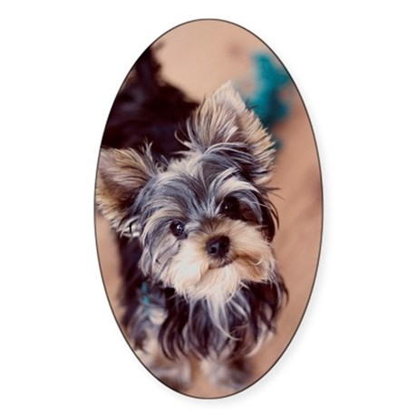 Yorkshire terrier puppy. Sticker (Oval)