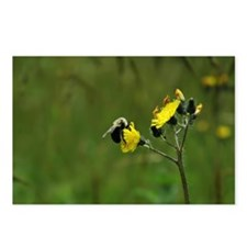 Bee on Yellow Postcards (Package of 8)