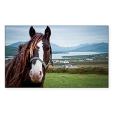 Irish horse with Ring of Kerry Decal