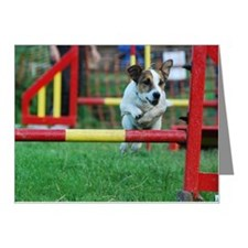 Dog Agility Jack Russell Ter Note Cards (Pk of 20)