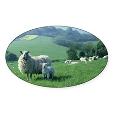 Ewes with lambs, May, Oakshott, Ham Decal