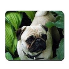 Pug standing on lawn Mousepad